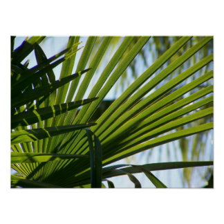 Crossed Palms poster