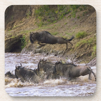 Crossing of the Mara River by Zebras and Coaster