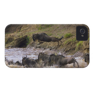 Crossing of the Mara River by Zebras and iPhone 4 Cover