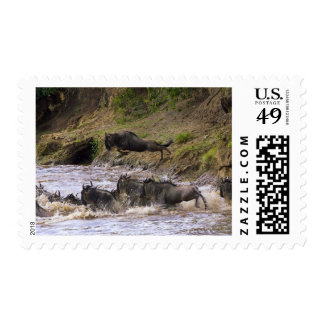 Crossing of the Mara River by Zebras and Postage Stamp