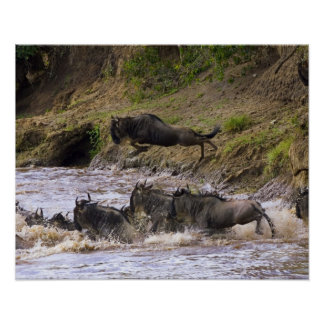 Crossing of the Mara River by Zebras and Print