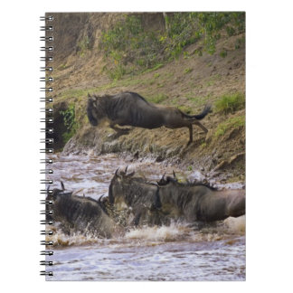 Crossing of the Mara River by Zebras and Spiral Notebook