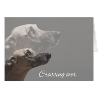 Crossing Over (Dog) Animal Notecards Card