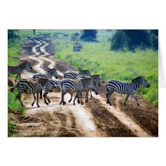 crossing zebra card