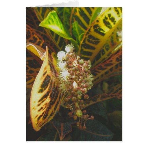 Croton en tarjeta de nota de la floración