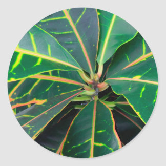 Croton Green Leaves Background Classic Round Sticker
