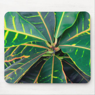 Croton Green Leaves Background Mouse Pad