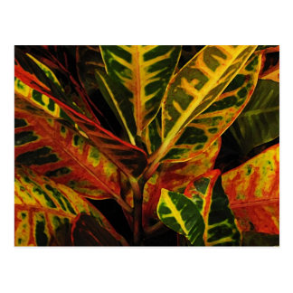 Croton Leaves Abstract Postcard
