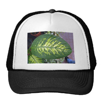 Croton Leaves Texture in Detail Hat