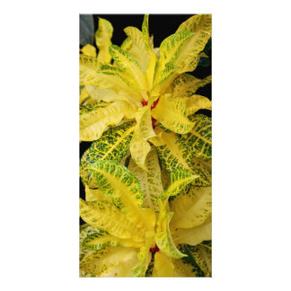 Croton Photocard Card