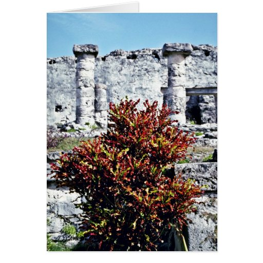 Croton rojo Bush en las ruinas mayas, Tulum Felicitacion
