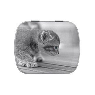 Crouching Kitten Jelly Belly Tins