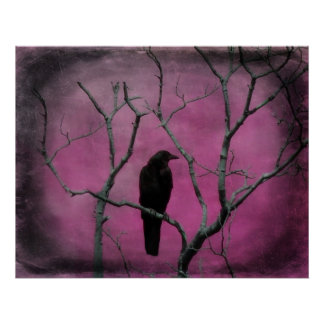 Crow And The Color Fuchsia Poster