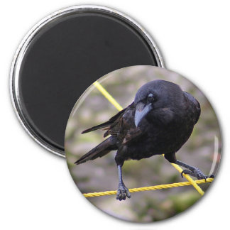Crow at Crossroads 2 Inch Round Magnet