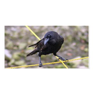 Crow at Crossroads Card