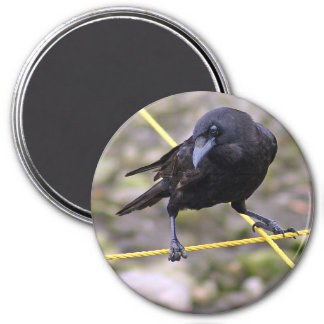 Crow at Crossroads Magnet