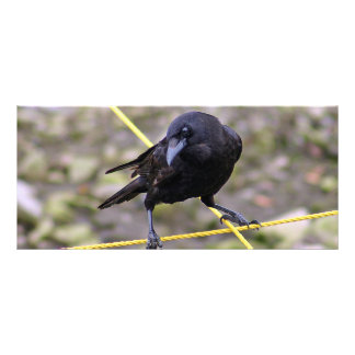 Crow at Crossroads Full Color Rack Card