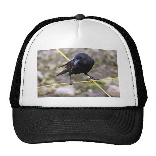 Crow at Crossroads Trucker Hat