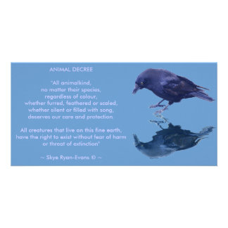 CROW Collection Card