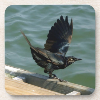 Crow Drink Coasters