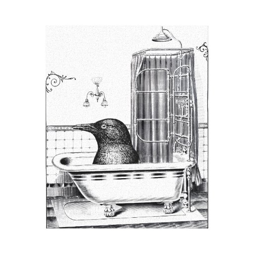 Crow In Vintage Bathtub Stretched Canvas Prints