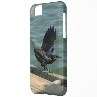 Crow iPhone 5C Cover