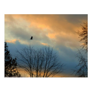Crow on a pastel sky postcard