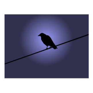 Crow on a Telephone Wire Postcard