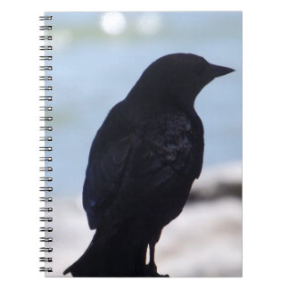 Crow Profile Notebook