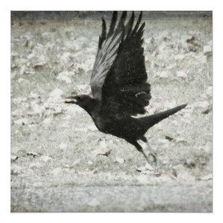 Crow/Raven Poster