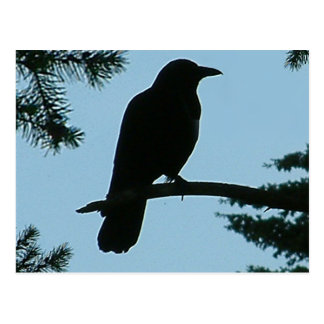 Crow Sitting in Tree Postcard