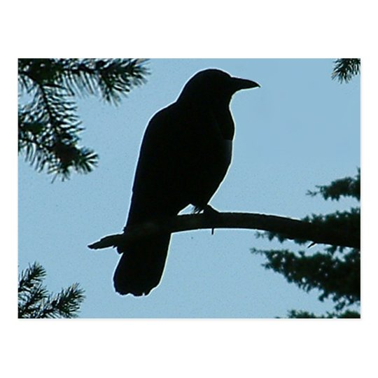 Crow Sitting in Tree Postcard