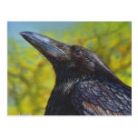 Crow Spring Sky Post Card