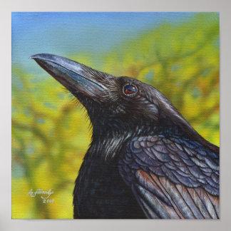 Crow Spring Sky Poster