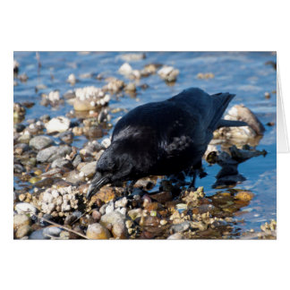 Crow Wading in Water Card