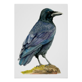 Crow Watercolor Painting Poster