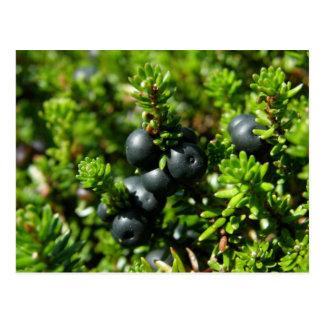 Crowberries on Unalaska Island Postcards