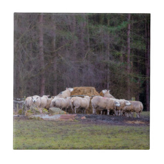 Crowd of sheep ceramic tile
