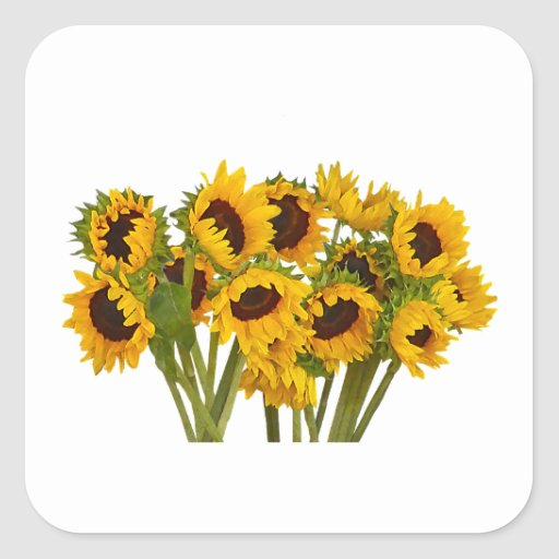 Crowd of Sunflowers Square Stickers