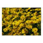 Crown Daisies / Chrysanthemum Coronarium Card