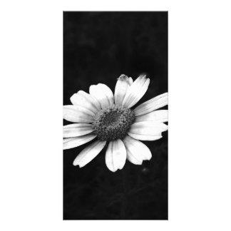 Crown Daisy Card