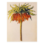 Crown Fritillary, from 'La Guirlande de Julie' Postcard