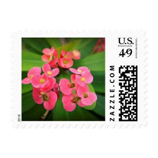 Crown of Thorns Postage Stamp