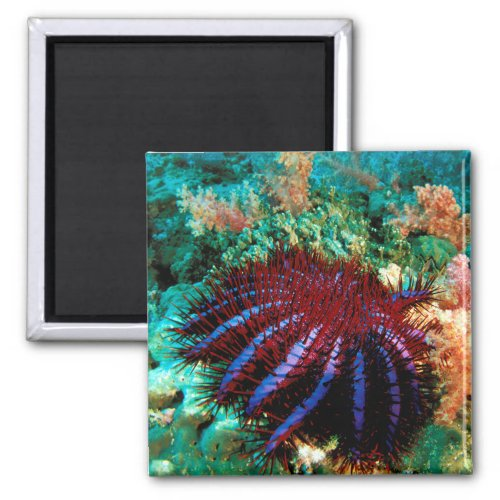 Crown_Of_Thorns Starfish Magnet