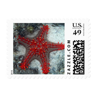 Crown Of Thorns Starfish On The Coral Reef Postage