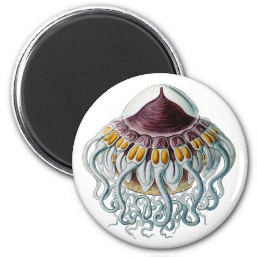 Crown or Helmet Jellyfish 2 Inch Round Magnet