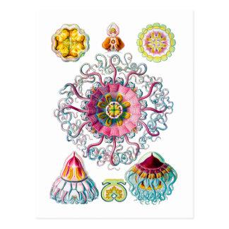 Crown or Helmet Jellyfish Postcard