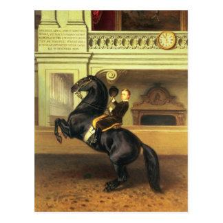 Crown Prince Rudolph of Austria Postcard