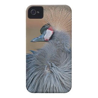 Crowned Crane iPhone 4 Covers