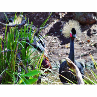 Crowned Cranes Photo Cut Outs